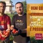"""""""Tomato Revolution """" la filiera etica del pomodoro libero dalle mafie e dal Caporalato."""