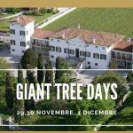 Curare e gestire gli alberi e le foreste oggi - Convegno Internazionale